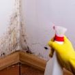 Как убрать плесень и грибок со стен в квартире?