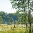 План высадки леса перевыполнен на 120% в Нижегородской области